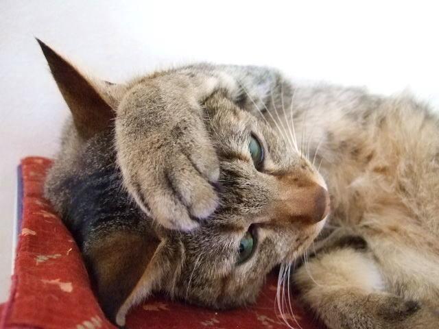 猫 グッズ 雑貨