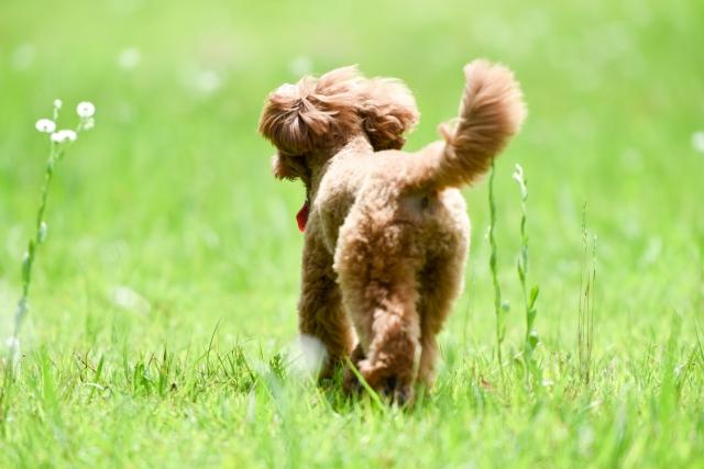 愛犬 ペット