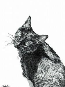 「黒猫のすもも」/山田貴裕
