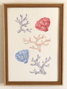 「coral & shells」